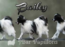 Baily Poster 1text20x8-HR