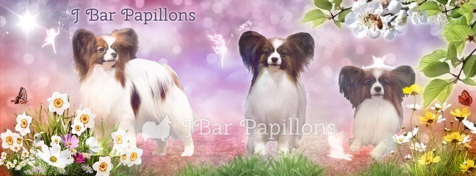 J Bar Papillons